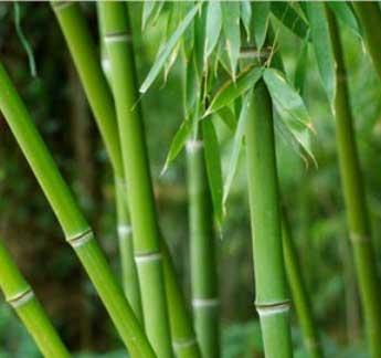 بهترین گیاهان برای فنگ شویی